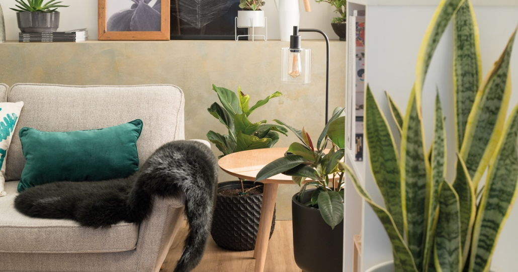 Using plants to help make your home a healthy place