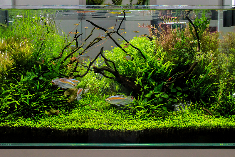 Including a fish tank or other pets to help make your home healthy